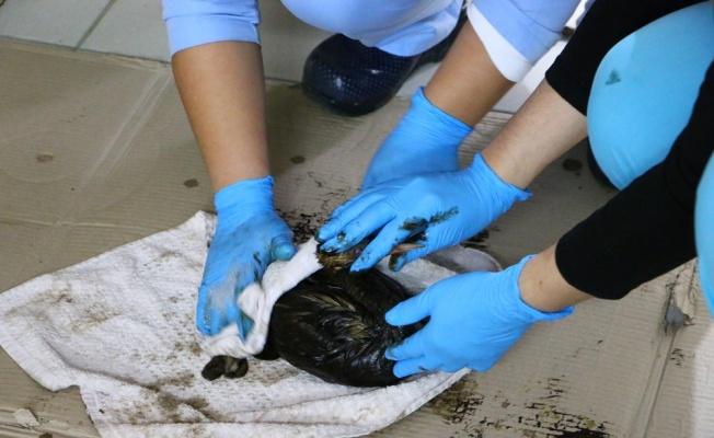 Denize sızan petrolden dolayı kuşlar ölüyor