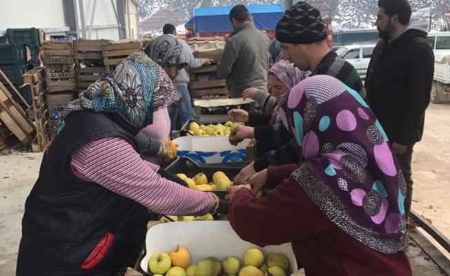 Denizli Çameli'nden Irak'a 40 ton elma ihracatı