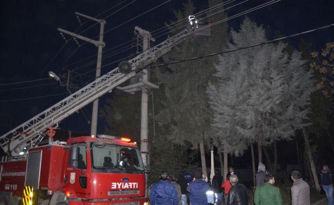 Ağaçta mahsur kalan kedi için elektrikler kesildi