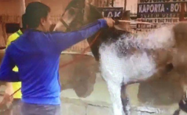 Atı oto yıkamacıda böyle yıkadılar