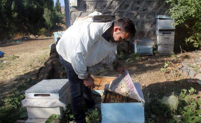 2 milyon arısı telef olan arıcı zor durumda