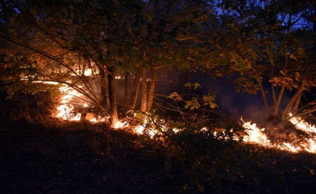 Eskişehir'deki orman yangınında 45 hektarlık alan zarar gördü