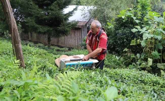 Günde 1 ton çayı kendi geliştirdiği makineyle topluyor
