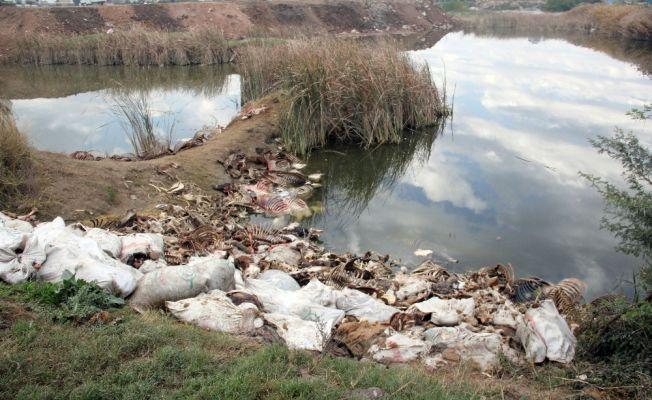 Adana'da yüzlerce at ve eşek kemikleri bulundu