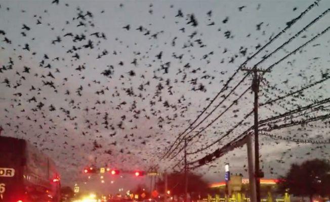 Binlerce kuş böyle görüntülendi
