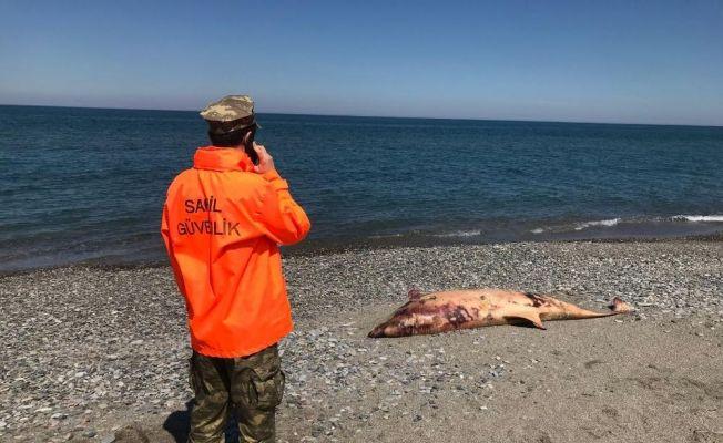 Vatandaşlar gördü: Sahil Güvenlik müdahale etti