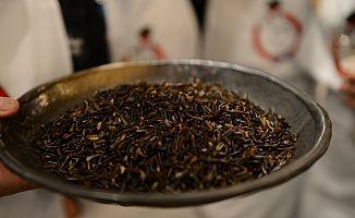 Protein deposu yabani pirince ilgi artıyor