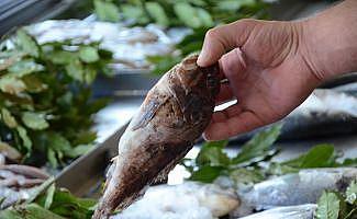 Dışı zehirli, içi lezzetli balık: İskorpit