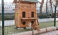 Sokak kedileri için iki katlı ahşap kedi evleri yapıldı