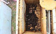 Aydın'da toplu arı ölümleri