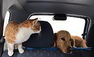 Köpek ve kedinin şaşırtan dostluğu