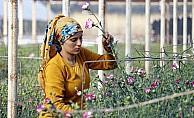 14 Şubat için 8 milyon dolarlık çiçek ihracatı