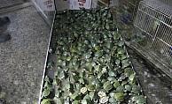 4 bin su kaplumbağası yeni yuva bekliyor