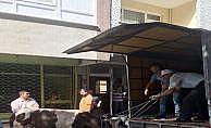 Kaçan boğa Zeytinburnu'nda dehşet saçtı: 3 yaralı