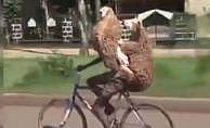 Bisikletle 2 kurbanlık taşıdı
