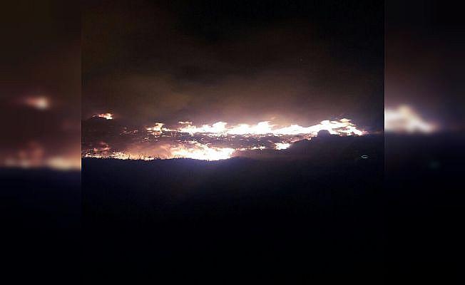Bodrum'daki yangında 1 hektarlık alan kül oldu
