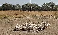 Kurduğu kaz çiftliği ile Doğu Anadolu'ya hitap edecek