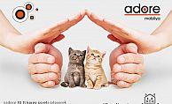 Adore Mobilya'nın Geleneksel Adore Kedi Evi Projesi yeniden başlıyor
