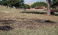 Çanakkale'de köpeği diri diri yaktılar