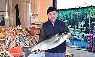 Balıkesir'de levreğin kilosu 100 liradan satıldı