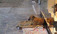 Sokak hayvanları üşümesin diye battaniye serdiler